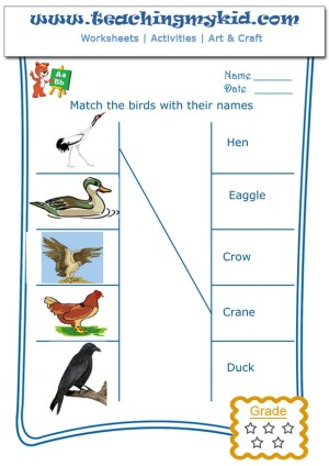 English Worksheets Match The Birds With Their Names 1