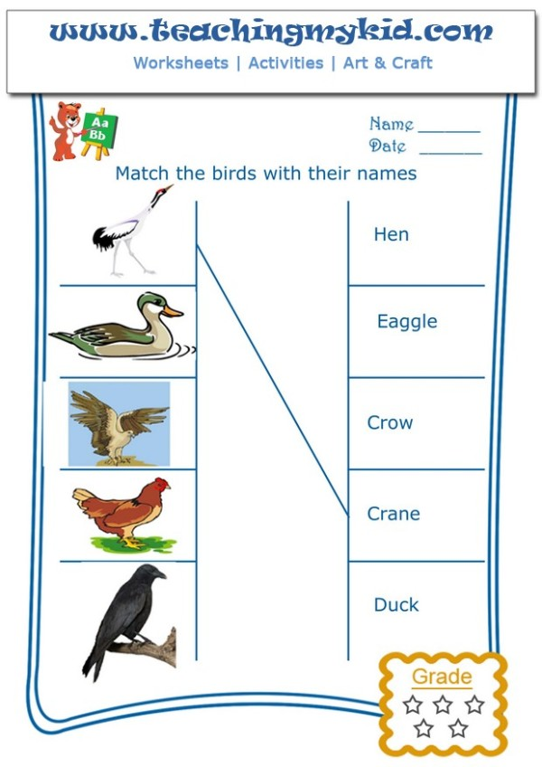 english worksheets - Match the birds with their names - 1