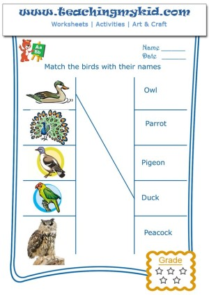 free worksheets - Match the birds with their names -2