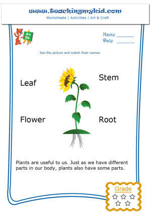 kindergarten learning match the parts of a plant. Black Bedroom Furniture Sets. Home Design Ideas