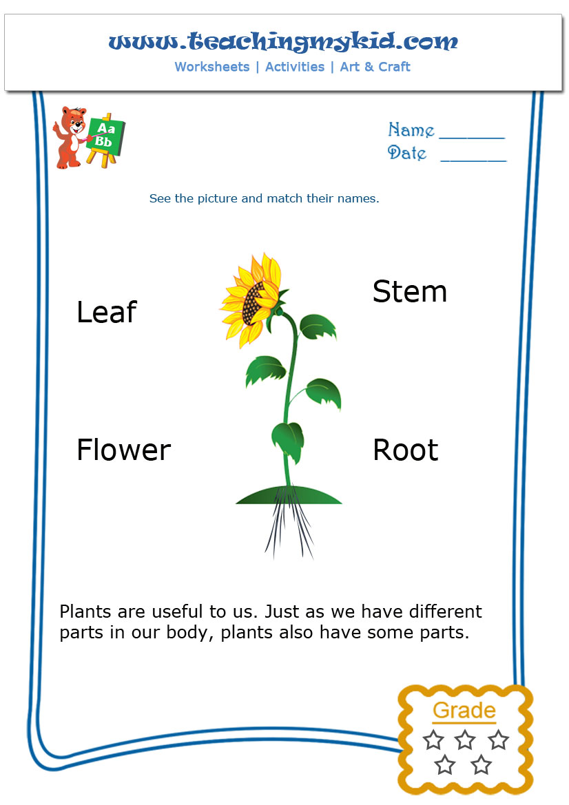 Kindergarten learning Match The Parts of a Plant – Parts of a Plant Worksheet